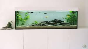 aquarium im wohnzimmer aus becken 8877 hanspeter