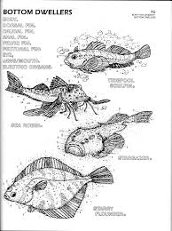 Flower Anatomy Coloring Sheet Marine Biology Flipbook Concepts
