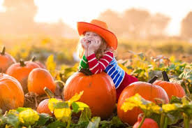 Pumpkin Patch Animal Farm In Moorpark California by Find Fresh Produce And Tons Of Fun On Moorpark Real Estate