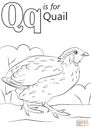 Click The Letter Q Is For Quail Coloring
