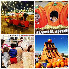 Pumpkin Patch With Petting Zoo Las Vegas by February 2014 Little Wagon Train