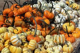 Pumpkin Patch Farm Temecula by Halloween 2014 Live Oak Pumpkin Patch Opens Sept 20 U2013 Press