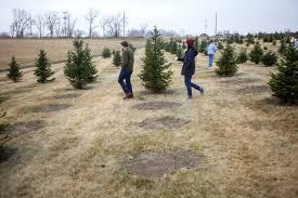 Christmas Tree Farm Lincoln Ne by Endangered Tradition Christmas Tree Farms Dwindle Local