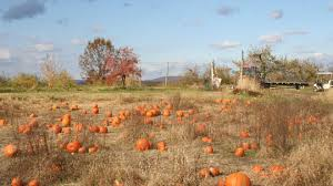 Apple Pumpkin Picking Queens Ny by Where To Go Pumpkin Picking Near Nyc With Kids