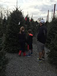Kroger Christmas Trees 2015 by Just Shy Of A Y November 2015