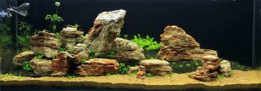 Cuisine: Rocks Aqua Rebell Aquascape Designs For Reef Tanks ... Cuisine Perfect Aquascape Aquarium Designs Ideas With Hd Backyard Design Group Hlight And Shadow Design For Your St Charles Il Aqua We Share Your Passion For Success Classic Series Grande Skimmer Aquascapes Amazoncom 20006 Aquascapepro 100 Submersible Pump Pond Supply Appartment Freshwater Custom 87 Best No Plant Images On Pinterest Ideas