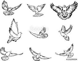 Dove flying dove black and white image options image vector drawing