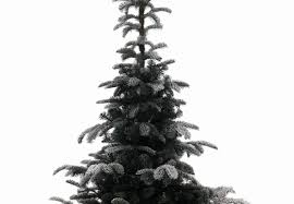 Lifelike Artificial Christmas Trees Uk by Kaemingk 6ft Snowy Nordmann Fir Life Like Artificial Christmas