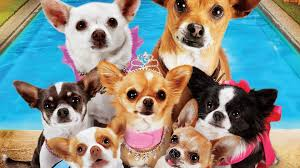 Beverly Hills Chihuahua 3 Coupon Canada - Bamboo Skate Coupon Code 20 Off Temptations Coupons Promo Discount Codes Wethriftcom Bton Free Shipping Promo Code No Minimum Spend Home Facebook 25 Walmart Coupon Codes Top July 2019 Deals Bton Websites Revived By New Owner Fate Of Shuttered Stores Online Coupons For Dell Macys 50 Off 100 Purchase Today Only Midgetmomma Extra 10 Earth Origins Up To 80 Bestsellers Milled Womens Formal Drses Only 2997 Shipped Regularly 78 Dot Promotional Clothing Foxwoods Casino Hotel Discounts Pinned August 11th 30 Yellow Dot At Carsons Bon Ton Foodpanda Voucher Off Promos Shopback Philippines Latest Offers June2019 Get 70