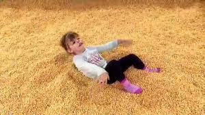Pumpkin Patch Animal Farm In Moorpark California by Corn Pit At Zoomars Pumpkin Patch Youtube