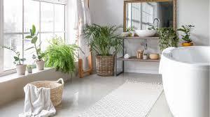 18 pflanzen für das badezimmer haus garten profi