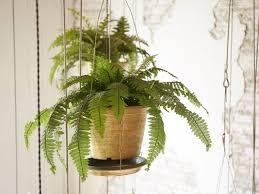 hängepflanzen so wachsen pflanzen in luftiger höhe