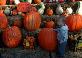 Rombach Pumpkin Patch Address by Brain Jail Me And My Buddy In The Pumpkin Patch