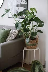 natürliche deko unser seegras pflanzkorb suma bei euch zu