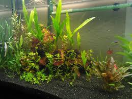 75g low tech soil tank redux page 2 the planted tank forum