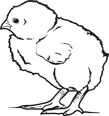 Cute Baby Chick Coloring Page Print This Image