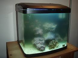 Extra Large Aquarium Decorations by Do You Want To Know How To Clean A Very Dirty Fish Tank