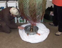 Grobe S Nursery And Garden Centre Setting Up A Xmas Tree Christmas Removal Bag Bulk