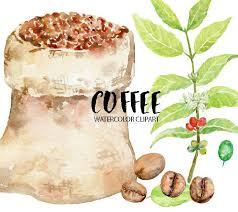 Hand Painted Bean For Instant Download Leaves Plant Clipart Coffee