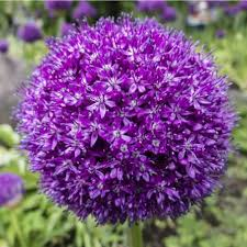 20 fabulous bulbs to plant in the fall for blooms