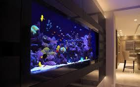 aquarium dans le mur aquarium encastrable designs repérés dans les intérieurs