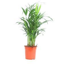 plante d駱olluante bureau 11 best plantes de bureau images on office plants