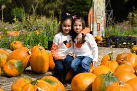 Mccalls Pumpkin Patch Haunted House by Guide To Pumpkin Picking In New Mexico I Love Halloween