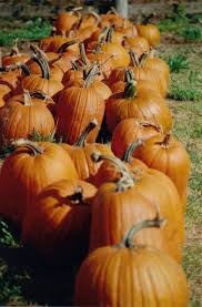 Can Rabbits Eat Pumpkin Seeds by How To Keep A Pumpkin From Rotting
