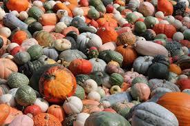 Varieties Of Pumpkins by Ludwigsburg One Of The World U0027s Best Pumpkin Festivals Gardendrum