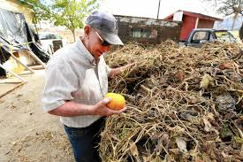 Best Pumpkin Patch Near Corona Ca by Drought Takes Toll On U0027agritourism U0027 Farms That Once Thrived On