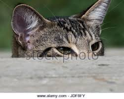 cats on deck cat on deck stock photos cat on deck stock images alamy