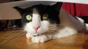 cat quotes 40 cat quotes that are brutally true diary of dennis
