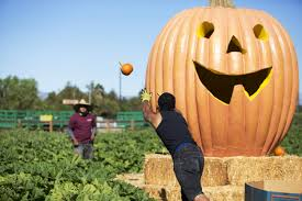 Johnson Farms Pumpkin Patch by Photo Slideshow Opening Day Of Halloween Harvest Festival The
