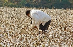 hey cliven bundy freedom beats picking cotton u2013 afroculinaria