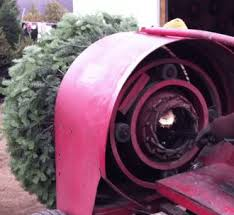 Christmas Tree Baler Craigslist by Awesome Picture Of Christmas Tree Balers Fabulous Homes Interior