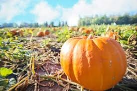 Pumpkin Patch Dixon Il by Fun Activities That Are Perfect For Halloween