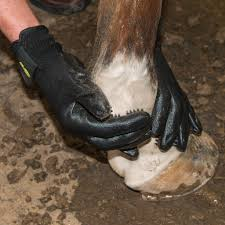Shedding Blade For Horses by Amazing Handson Grooming Gloves For Horses And Dogs U2013 Georgia