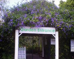 News and Events Mounts Botanical Garden Plant Sale ing