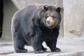 American Black Bear, Craigslist Dothan Al Cars And Trucks | Trucks ... Craigslist Decatur Alabama Used Cars For Sale By Owner Deals Auburn And Trucks Best For Alabama Awesome Rhenthillcom Used Lifted Chevy Trucks Sale On Birmingham And Imgenes De In Pennsylvania Dothan Cheap North Ms Of Search All Dump Truck Manufacturers As Well Quad Axle Food Carts Index Of Wpcoentuploads201 By Delightful