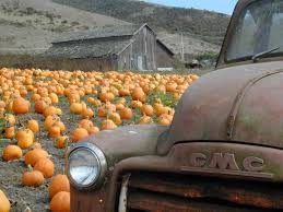 Silo Christmas Tree Farm Pumpkin Patch by Gosh What U0027s Not To Love In This Picture Old Truck Pumpkins And