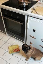 ein mops kam in die küche
