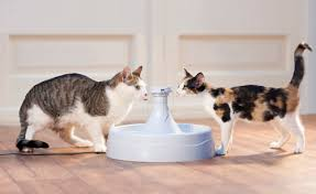 water for cats the best cat water fluffy kitty