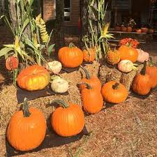 Columbus Pumpkin Patch by Paradise Pumpkin Patch Home Paradise Pumpkin Patch