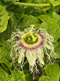 Garden Trellis Ideas 10 Of The Best Awesome Garden Design Ideas With Climbing Roses Diy Grape Vine Trellis