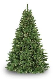 Snowy Dunhill Christmas Trees by Plain Decoration Dunhill Christmas Trees Fir Prelit Tree Lights