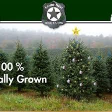Santa Cruz Ca Christmas Tree Farms by Skyline Ranch Tree Farm Christmas Trees 22246 Skyline Blvd