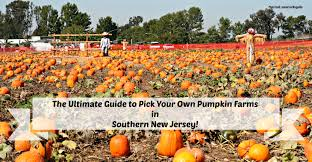 Pumpkin Picking Nj by The Complete Guide To Pick Your Own Pumpkin Farms In South Jersey