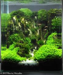 134 best Aquascaping & Tanks images on Pinterest