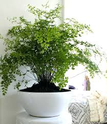 Best fice Plants No Sunlight Home Design Ideas and