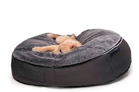 Bean Bag Chairs For Dogs Dog Proof Chair
